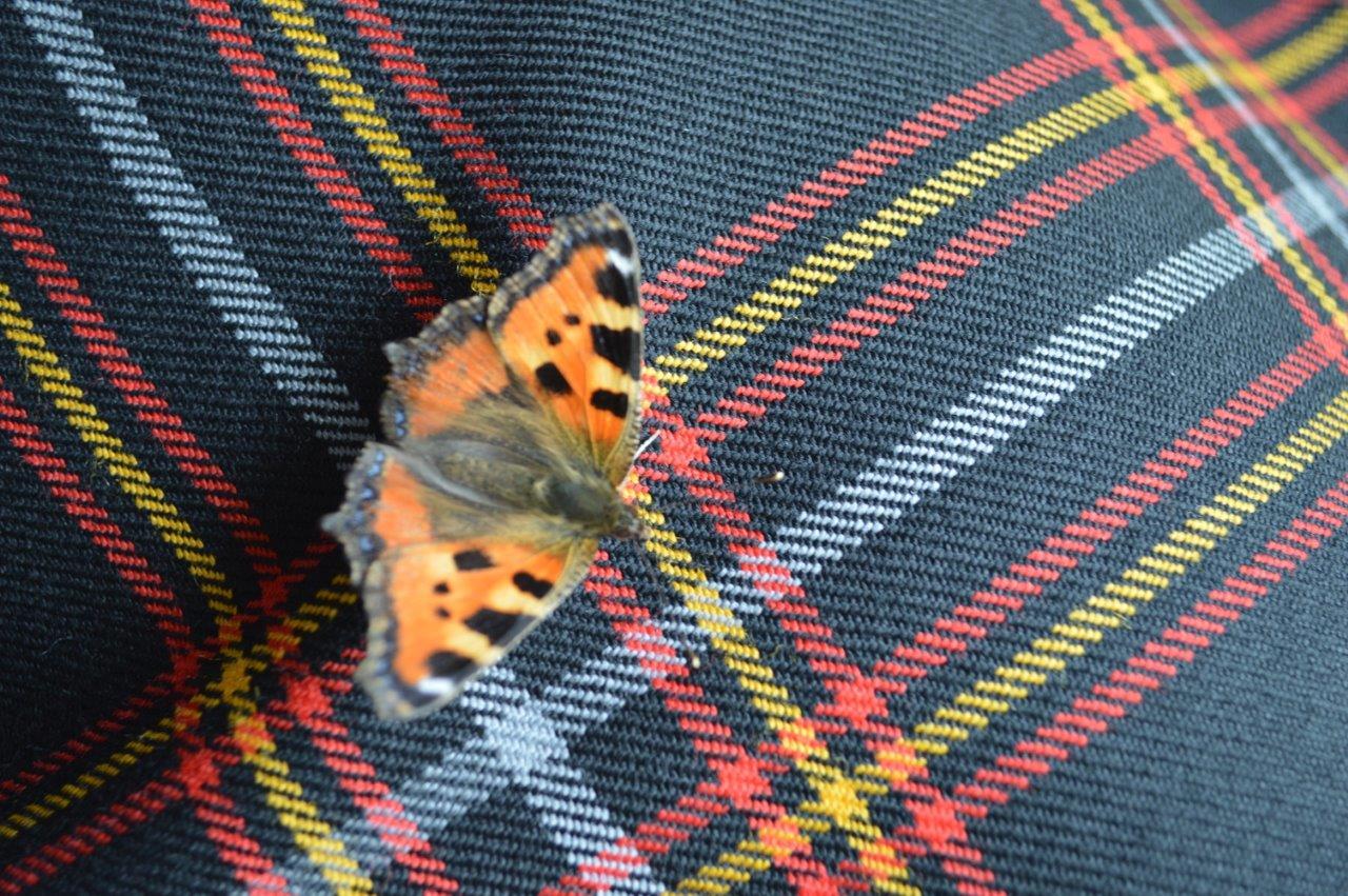 Schmetterling auf unserem Kilt